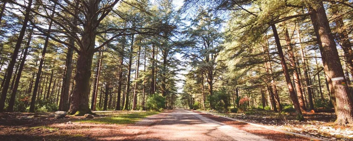 Randonnées à La Forêt des Cèdres